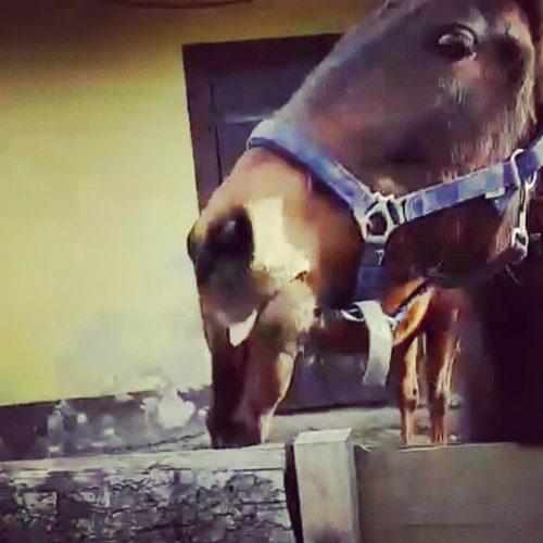 Landwirtschaft für Pferdehaltung
